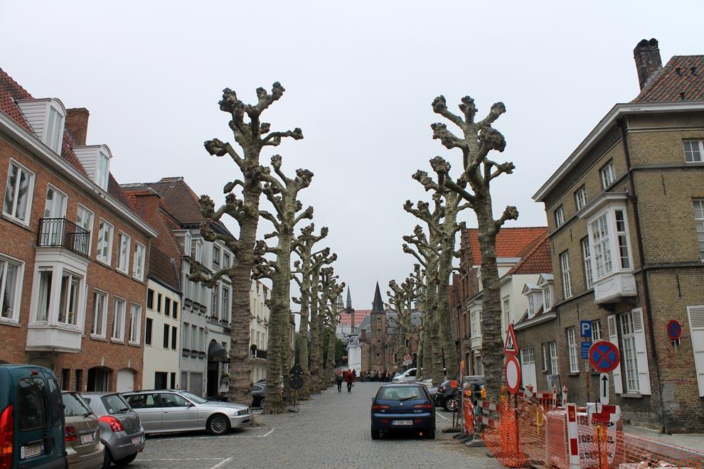 Брюгге. Деревья под стать погоде