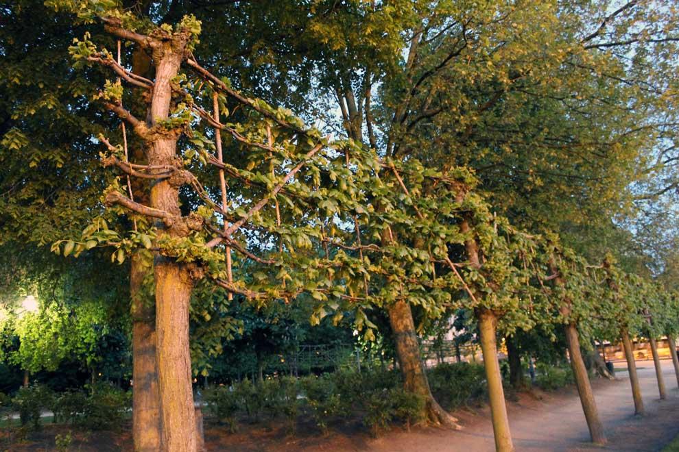 Брюссель. Брюссельский парк. Издевательство над деревьями