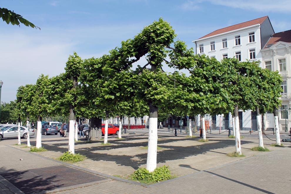 Брюссель. Закрученные деревья