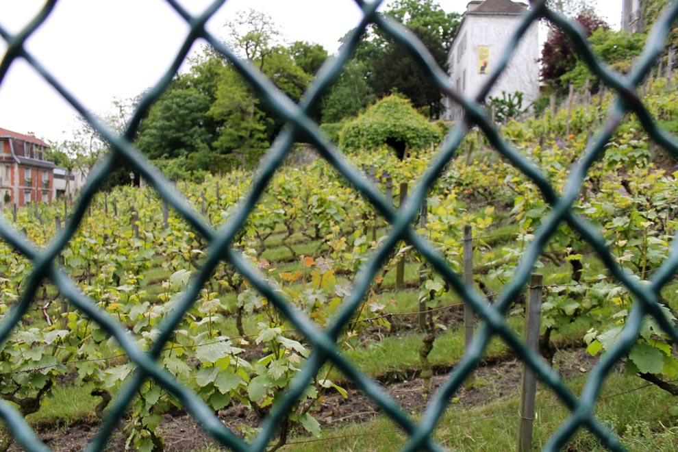 Париж. Виноградники Монмартра