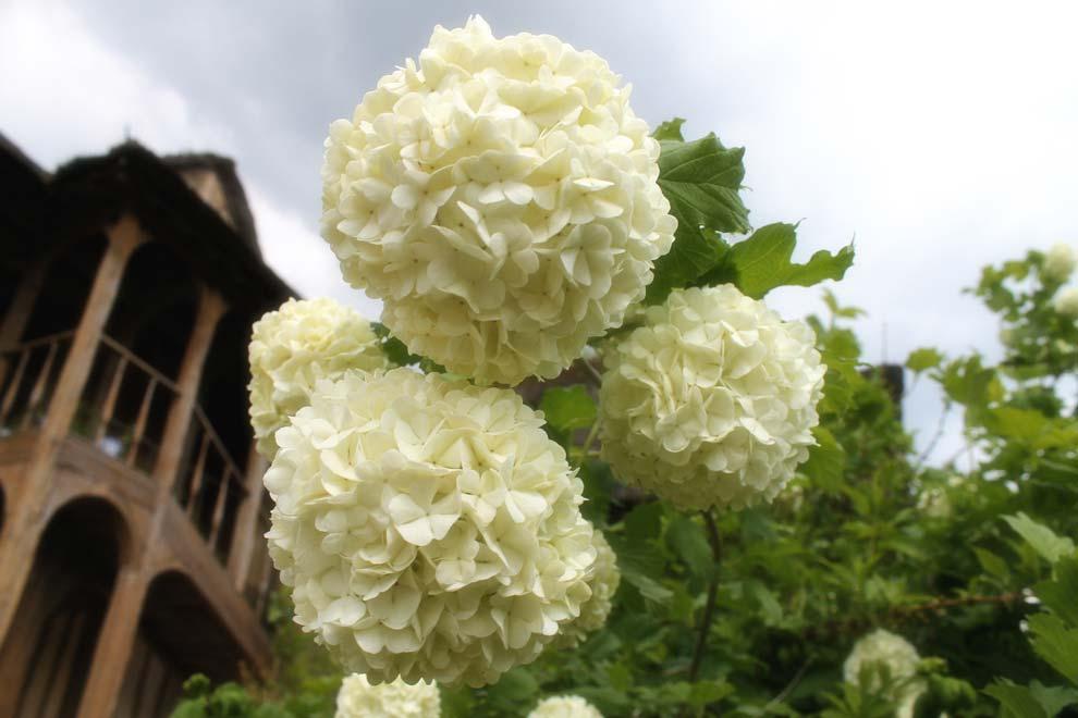 Цветы в деревне Марии-Антуанетты
