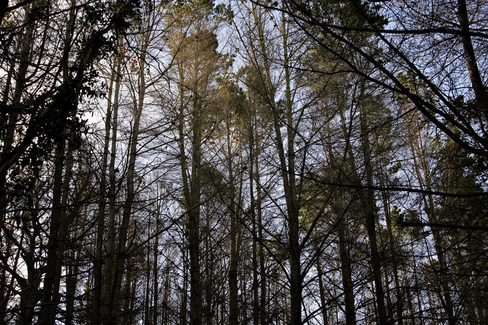 Россия. Девственные леса Коми