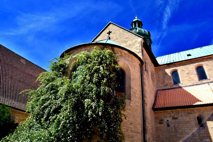 Тысячелетний розарий в Хильдесхайме